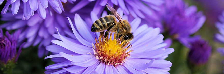 Non profit to help declining bee population
