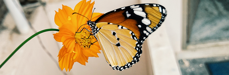 Featured image shows a butterfly resting on a yellow flower