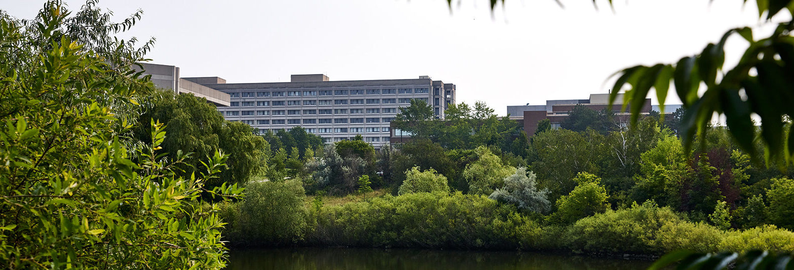Keele Campus stong pond FEATURED image for Yfile