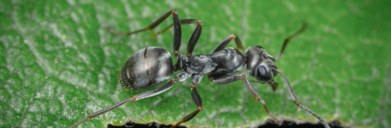 Spray days pest control treatments scheduled for Oct. 15 to 17
